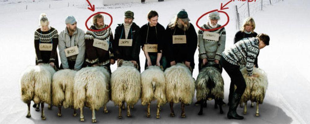 """Nordic Film Fest - """"Rams: Storia di due fratelli e otto pecore"""" di Grímur Hákonarson (2015)"""