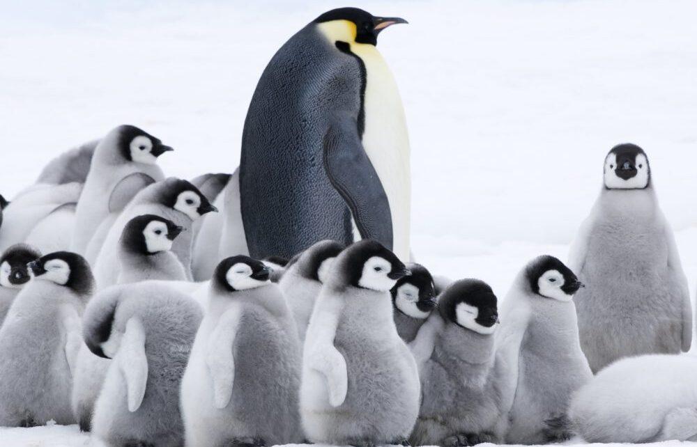 marcia pinguini pif