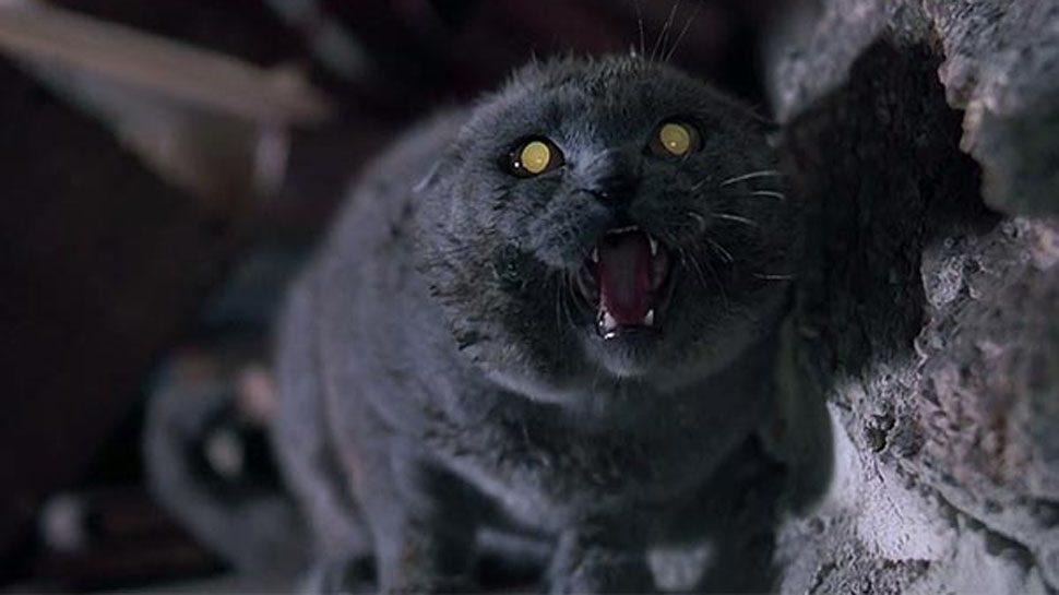 Pet Sematary - Cimitero vivente in Blu-Ray e 4k Ultra HD per il 30° anniversario